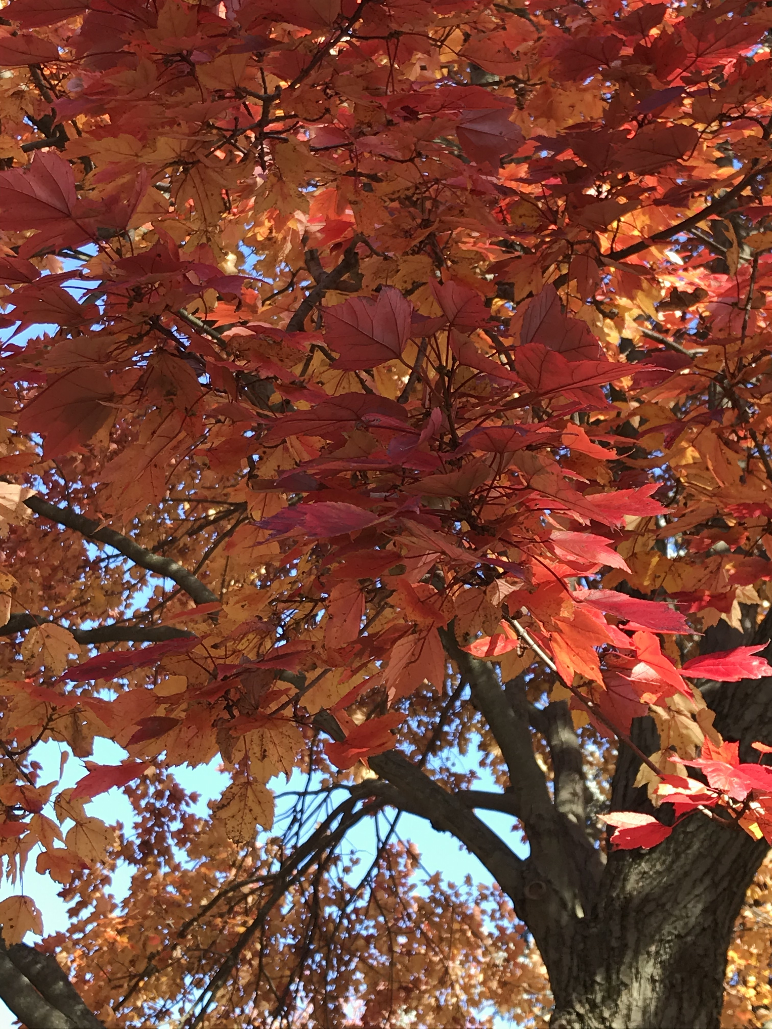 Autumn leaves picture