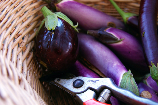 Small eggplants in a basket
