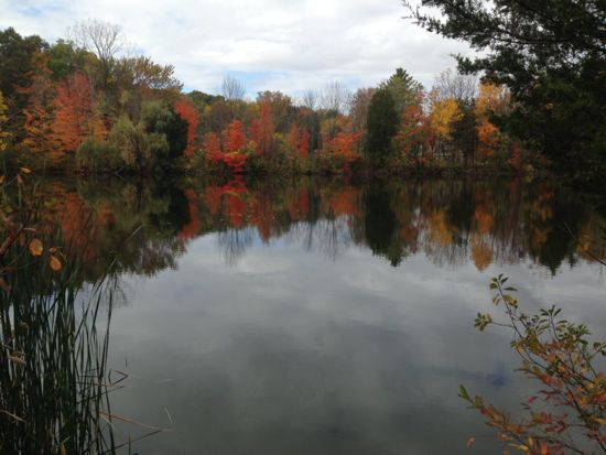 Fall foliage reflecting on a pond