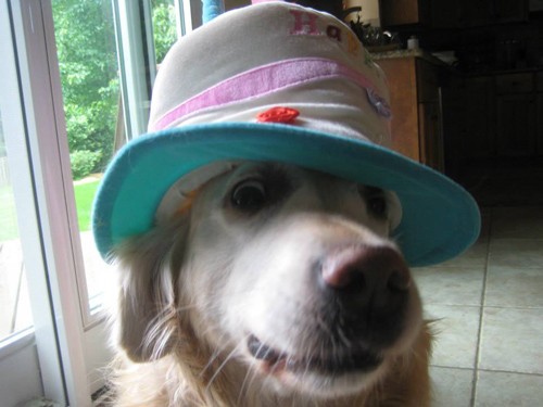 A dog wearing a birthday cake themed hat
