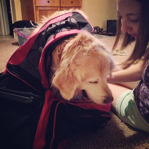 A dog sitting in a suitcase