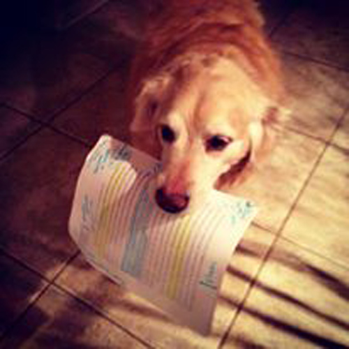 A dog carrying a marked up essay in its mouth