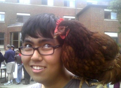 A chicken sits on someones shoulder