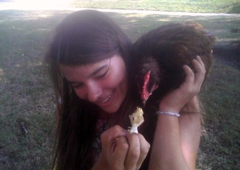 The chicken sitting on someone elses shoulder as they feed it an apple core