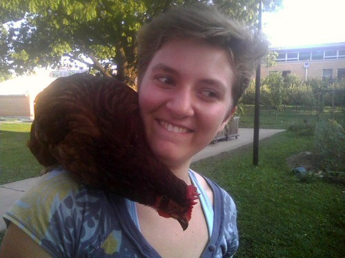 A chicken sits on someones shoulder and leans down towards the ground