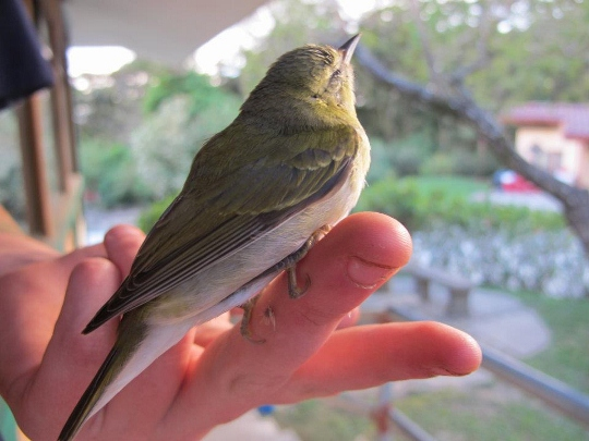 A small bird sits on a finger