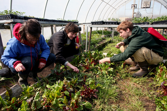 Three students gardening