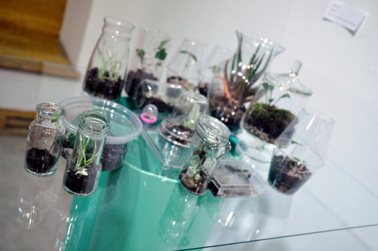 Plants growing inside of miniature terrariums