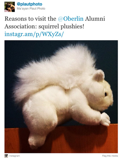 Instagram photo of a plush, white squirrel toy. User @plautphoto. Text: Reasons to visit the Oberlin Alumni Association: squirrel plushies!