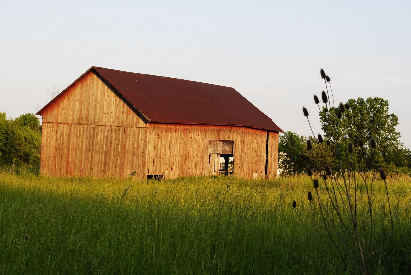 A wooden barn sitting in a field of tall grass