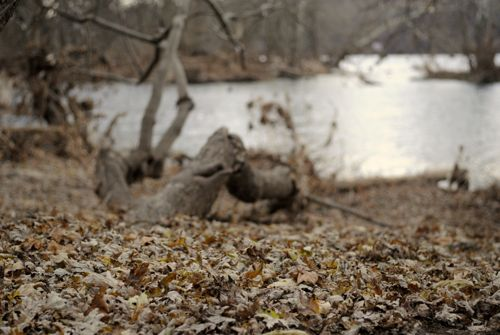 Dead leaves next to a river