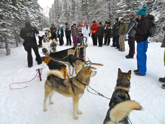 A group of people and a group of huskies in the snow