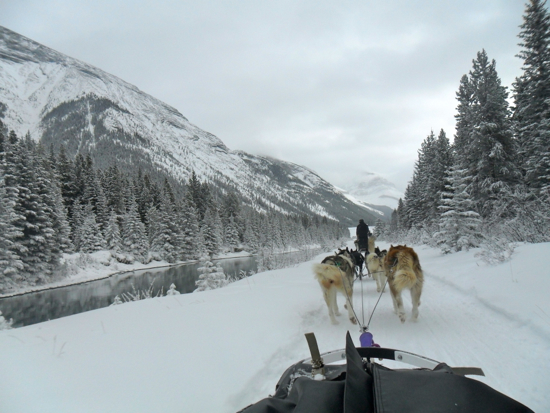 A view of a dog sled from the perspective of the sledder