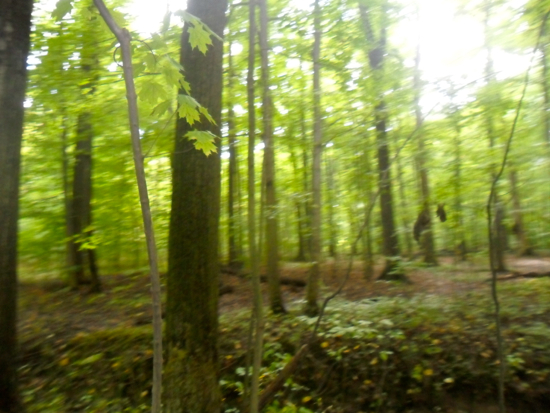 Blurry picture of the trees in the arb