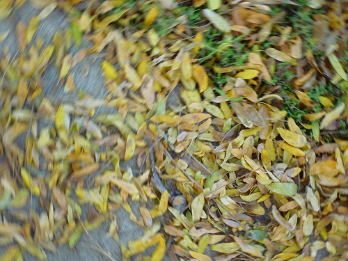 blurry picture of yellow leaves on the ground