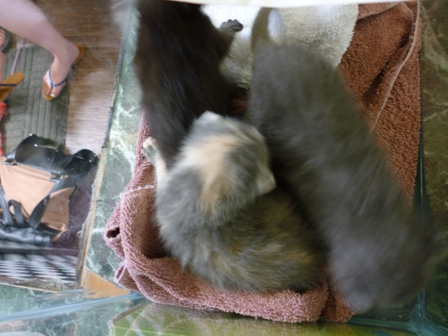Three kittens are a blur of motion.