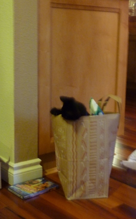 The kitten in a paper grocery bag