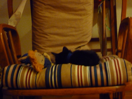 The kitten sleeps in a chair