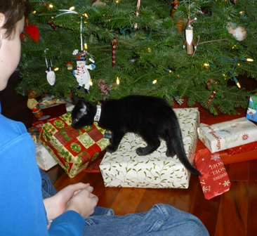 The kitten walks over christmas presents