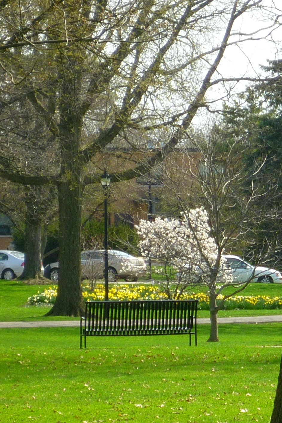 A bench in Tappan Square