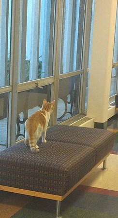 An orange and white cat patrols a seat in a corridor.