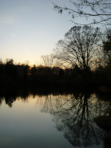 The arb water at sunset