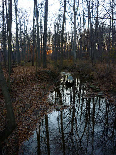 The creek in the arb with dead leaves on the ground and bare trees