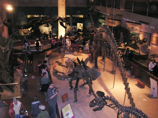 A museum with dinosaur skeletons