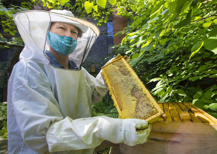 A beekeeper holds a section of a hive.