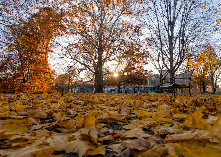Fall leaves cover a park at sunset.