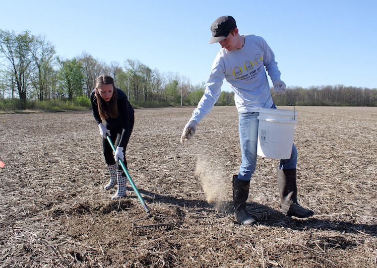 A person scatters seed while another person rakes.