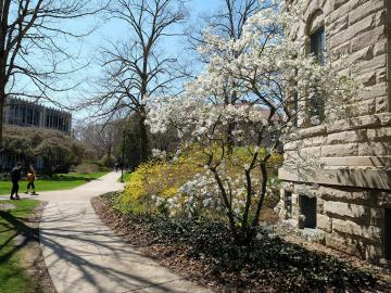 campus pathway in the spring