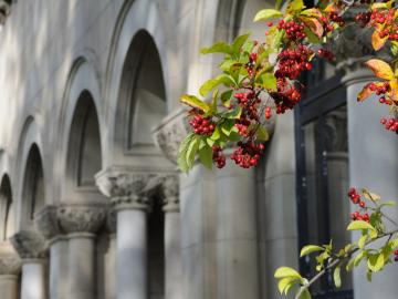 Berries on a branch in front of stone arches and columns