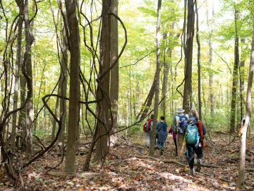 A group walks through a woody park.
