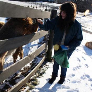 Georgia feeds animals, possibly alpacas, through a fence