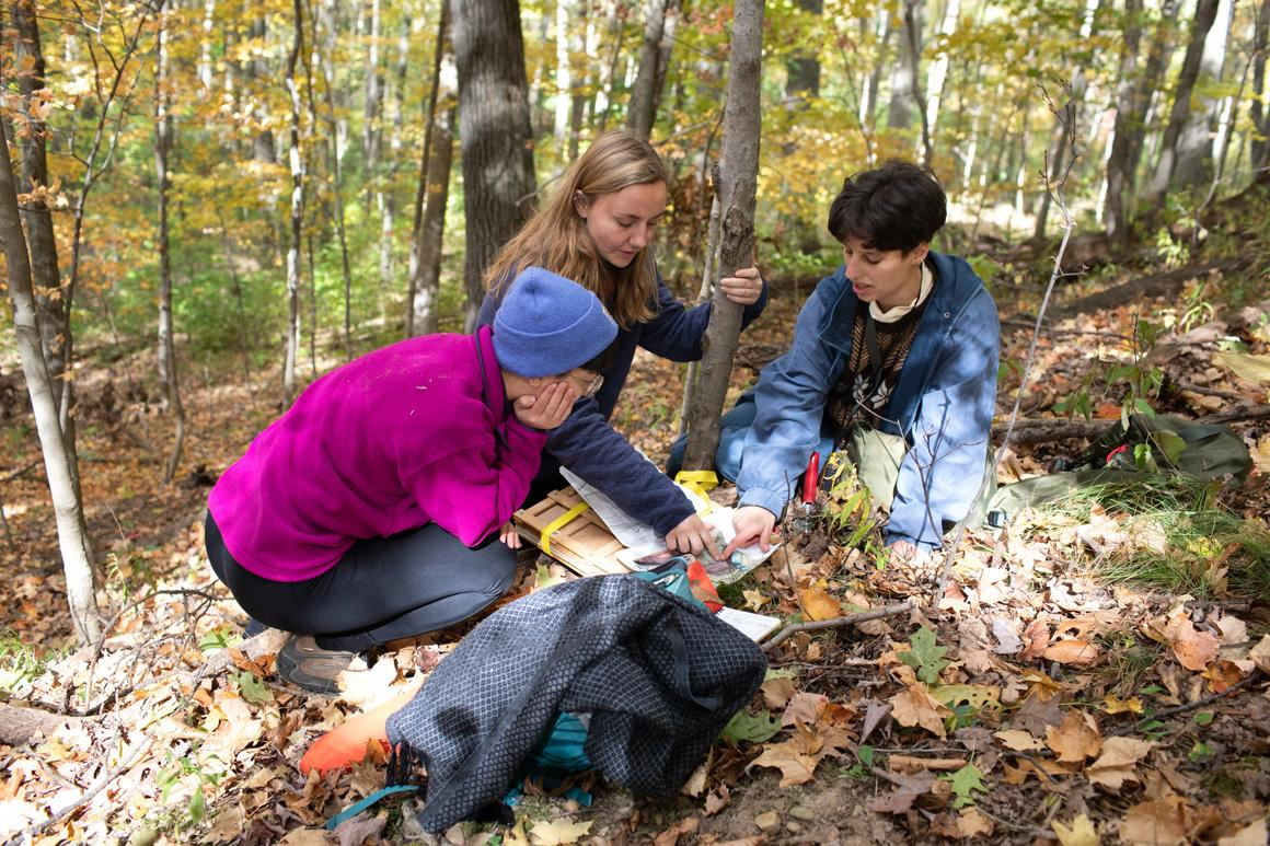 Three students crouch in the woods to examine something in the leaves.