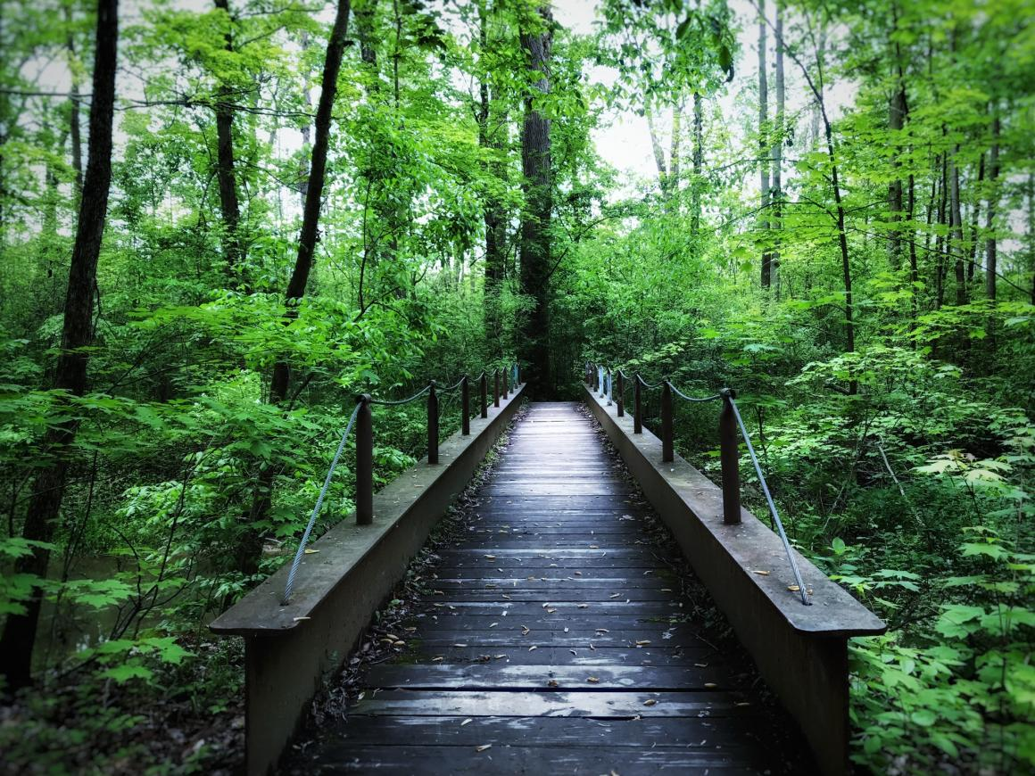 A footbridge leads into lush, green woods.