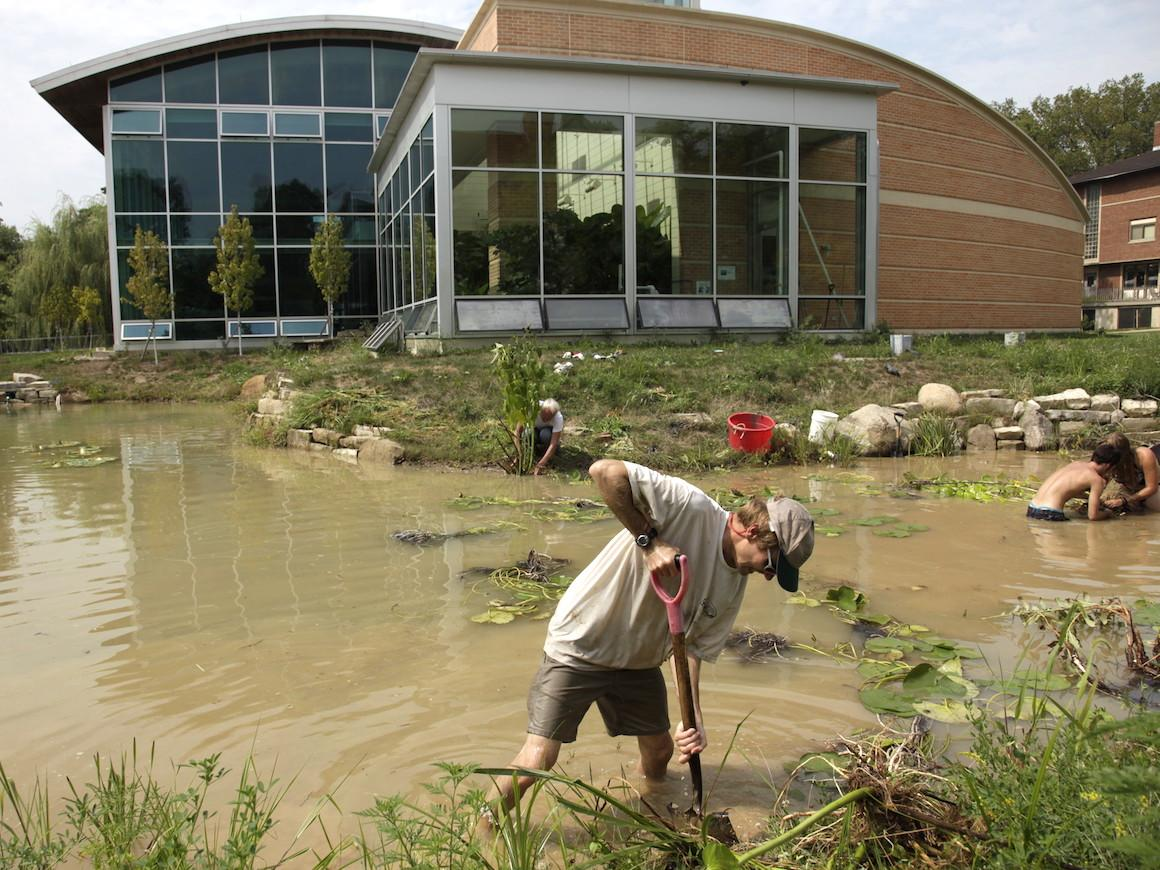 In a small pond beside a building, one person digs and others tend to plants.