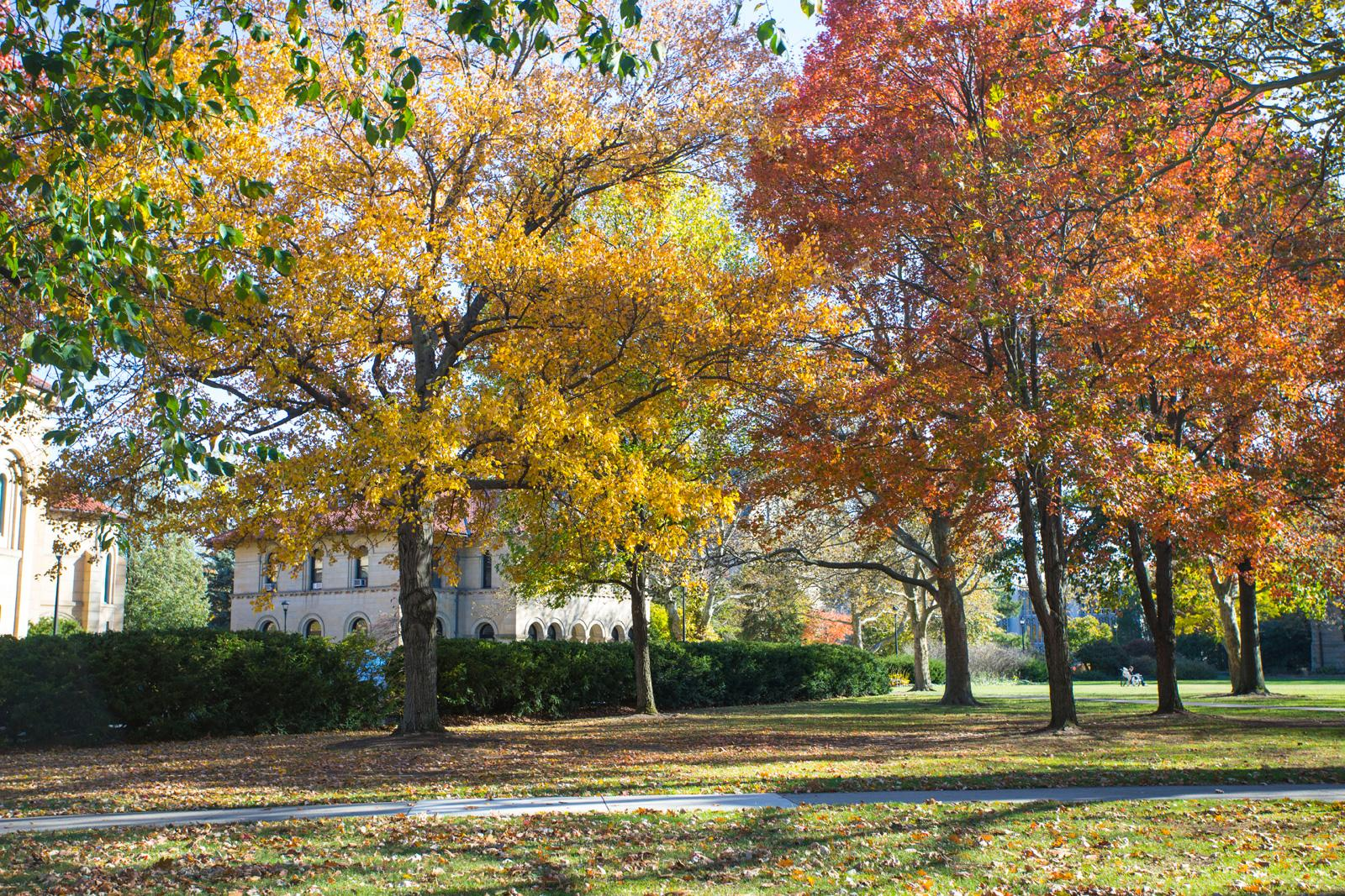 Fall foliage and campus buildings.