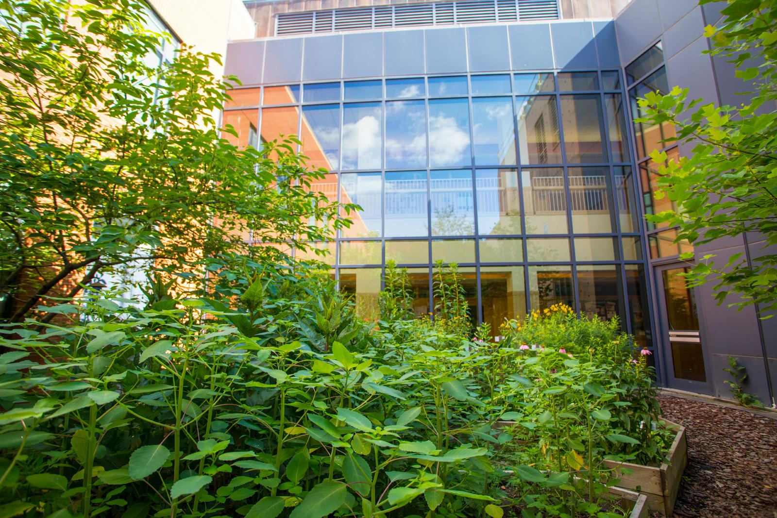 Lush green plants against the glass wall of a building.
