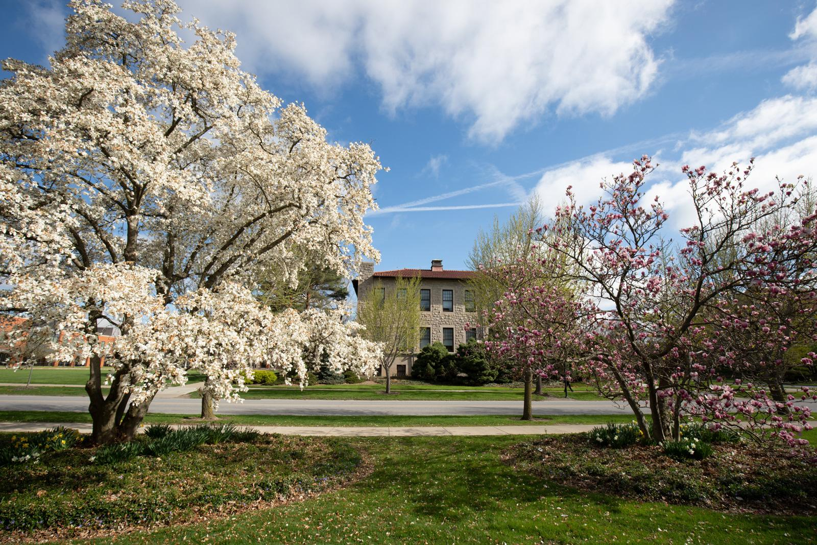 Flowering trees on campus.