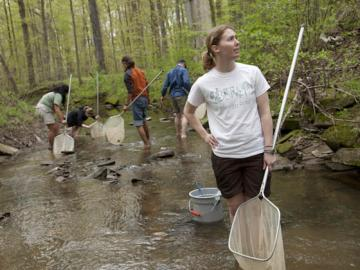 Students wade in a stream, equipped with nets.