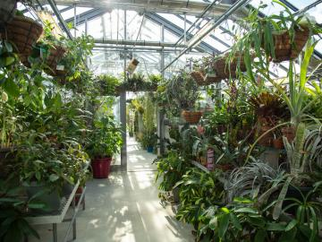interior of greenhouse with hanging plants on either side