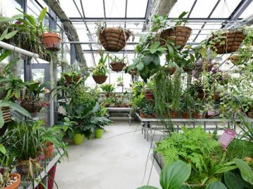 Inside the greenhouse there are many plants, some hanging or on shelves.