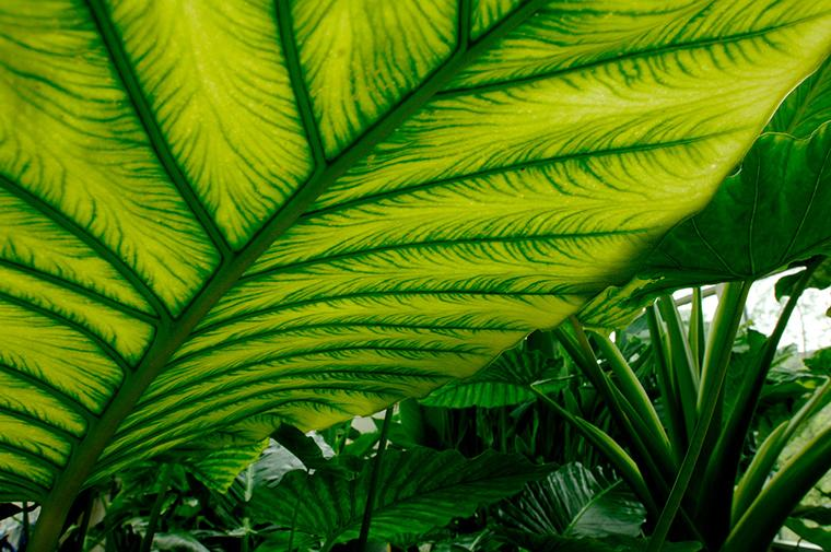 Looking up at a large, green leaf that extends beyond the frame.