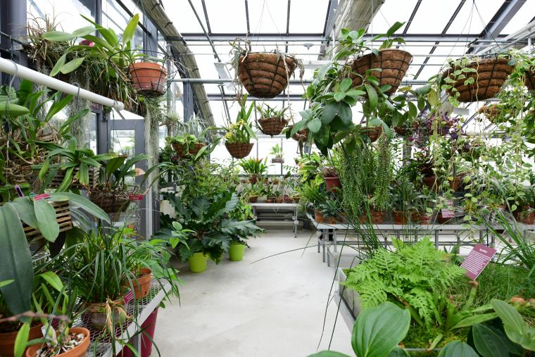 photo of the inside of the Biology Greenhouse