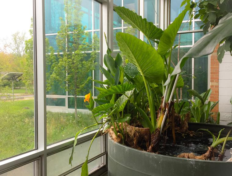 Large plants get sun by the glass wall of the AJLC building lobby.