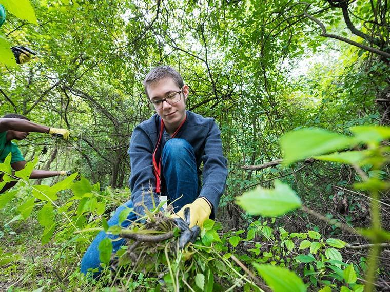student removing invasive plants.