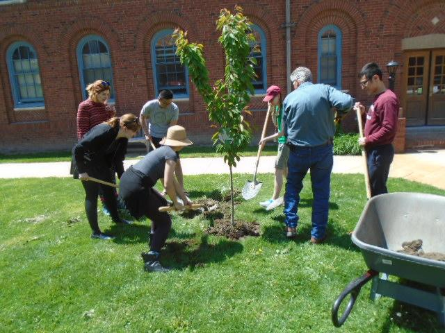 A group of people with shovels and a wheelbarrow plant a sapling.