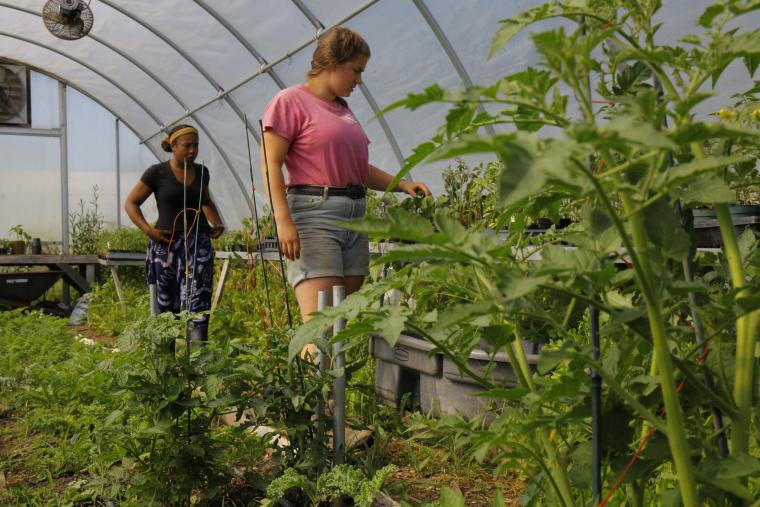 Two students attend to plants in the greenhouse.
